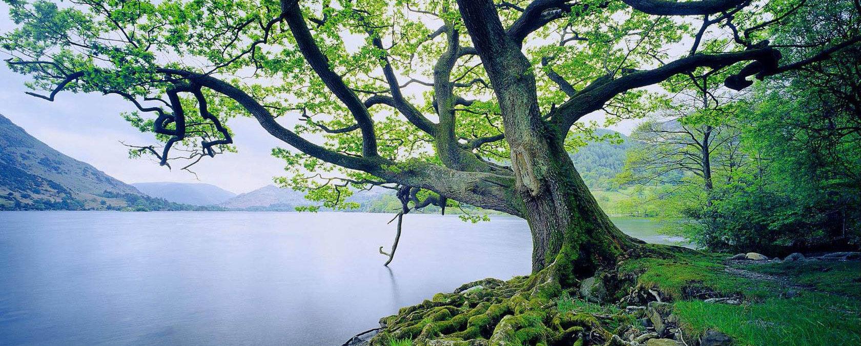 life-tree2
